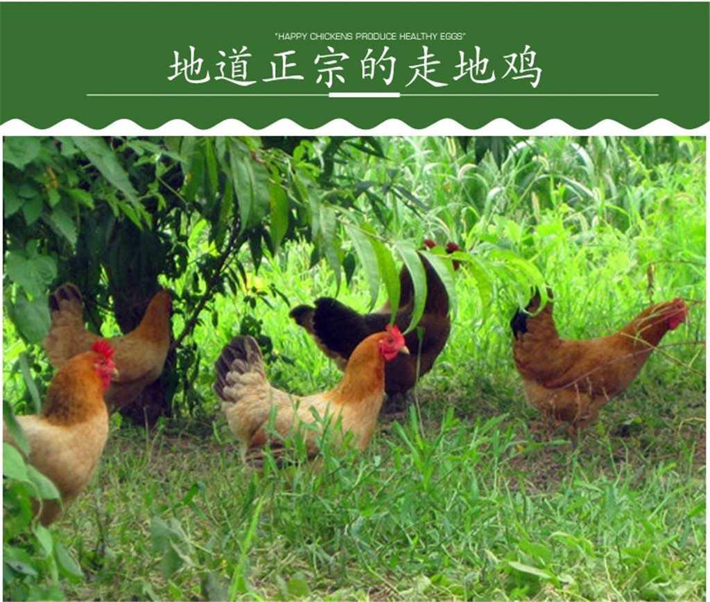 土鸡7.jpg